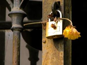 Imagen de un candado con una flor marchita